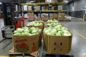 boxes of cabbage 300x200 - boxes-of-cabbage